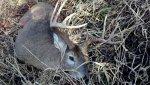 best deer.jpg