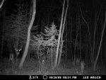 swamp buck.jpg