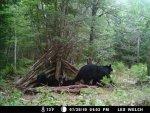 mamma bear.jpg