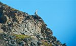 King of the Mountain - Copy.jpg