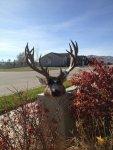 J's deer.jpg