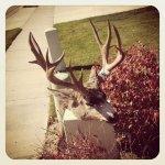 J's deer 4.jpg