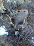 J's deer 3.jpg