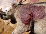Second Warthog Shot.jpg