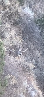 Muley buck sitting.jpg