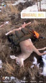 deer on stryker 2.png