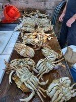 trin crab.jpeg