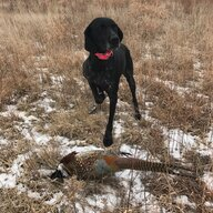 hunting_with_bailey