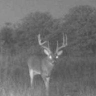 Texasbuckeye