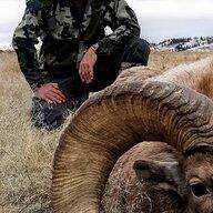 NE Herd Bull