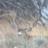 Goose2345