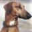 Summitdog